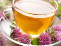 Чай с клевера лугового