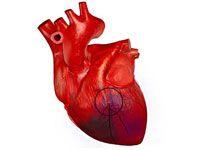 Сердце после инфаркта миокарда